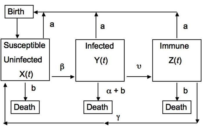 Microparasite vs  Macroparasite | Parasite Ecology