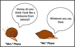 PhysaHelisoma