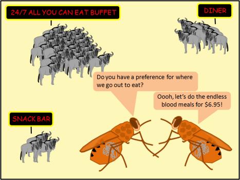 wildebeest buffet