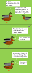 DuckNematodes3
