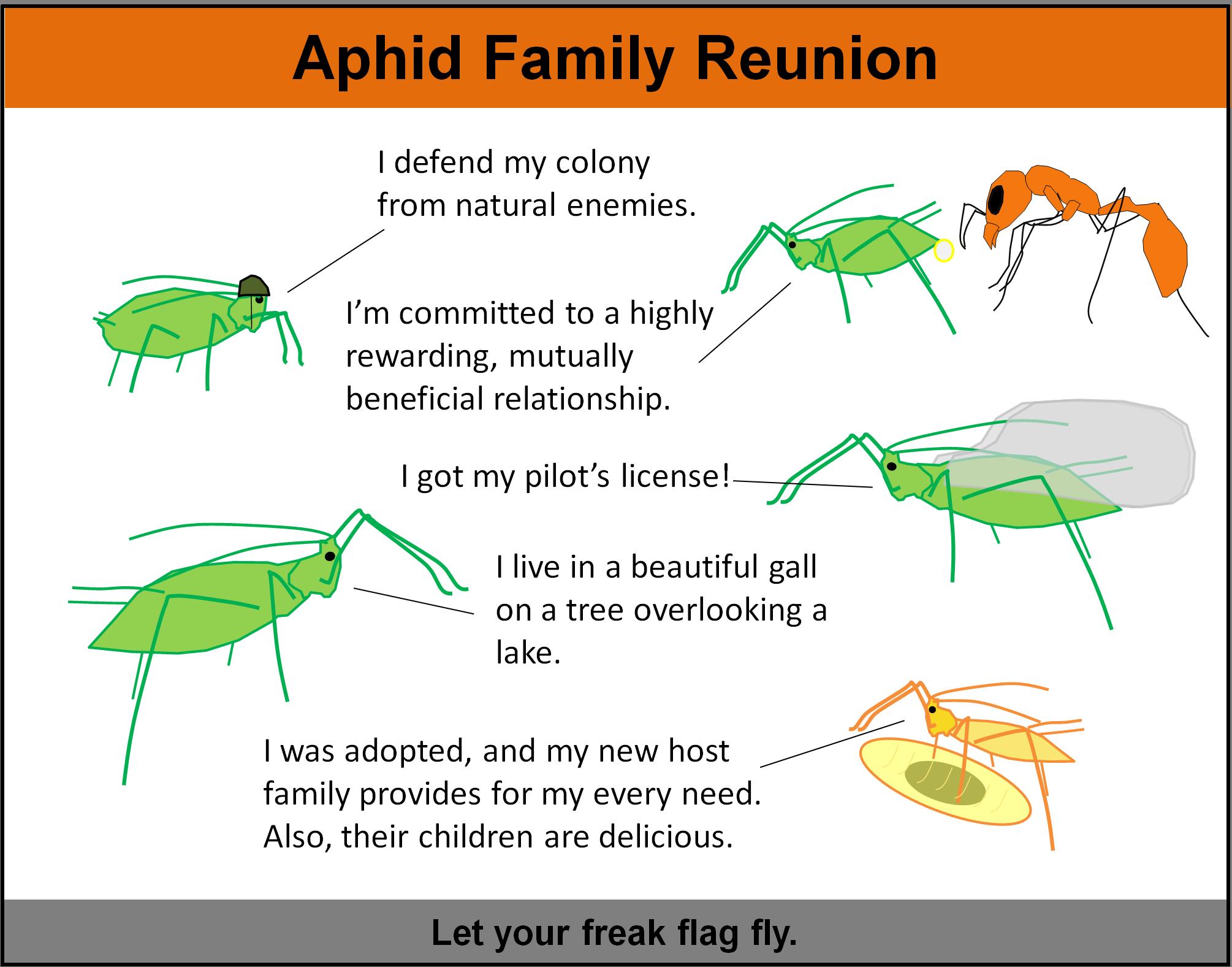 Aphidfamilyreunion