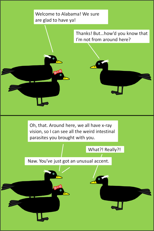cormorants.png