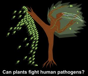 PlantsFightPathogens